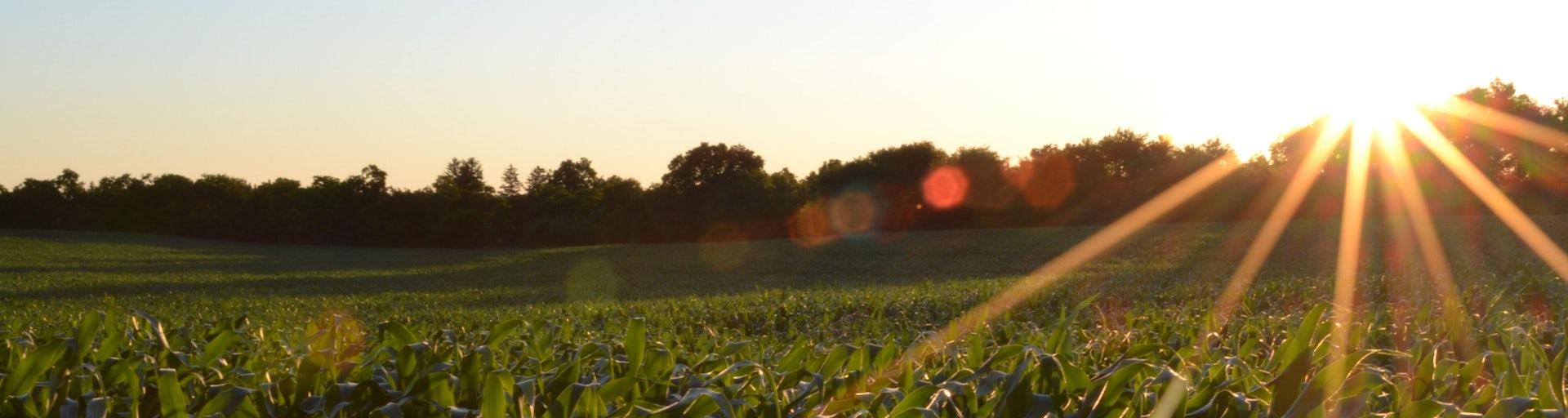 Boerenslim header