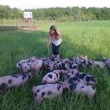 Buitengewone varkens in het veld