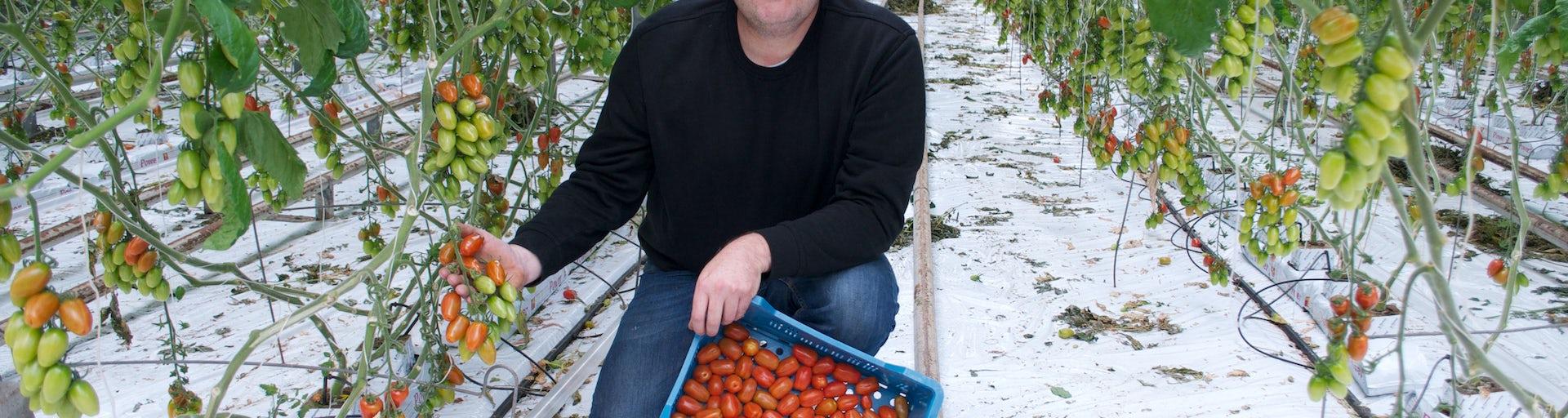 Tomaten voor onze maaltijdboxen