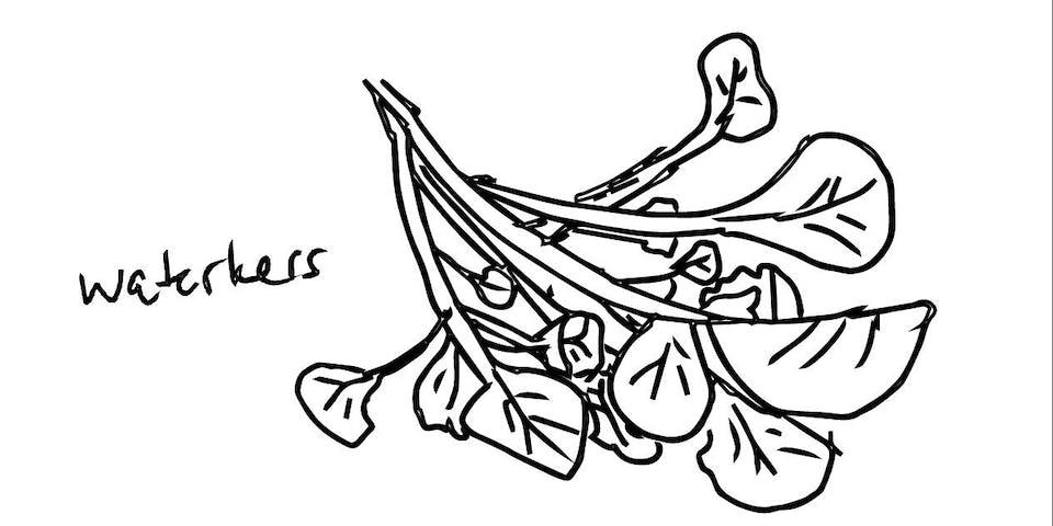 2304 Verse Tagliatelle Met Waterkerspesto En Tomaatjes