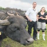 Buffalo Farm Twente 1